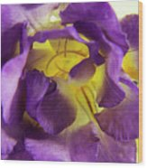 Purple Freesia Wood Print