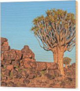 Quiver Tree Forest - Namibia Wood Print