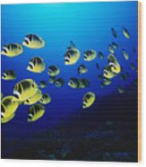Raccoon Butterflyfish Wood Print
