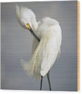 Snowy Egret Marco Island Florida Wood Print