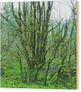 Spring In The Gorge Wood Print