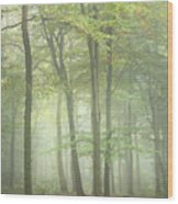 Stunning Colorful Vibrant Evocative Autumn Fall Foggy Forest Lan Wood Print