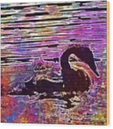 Swan Young Animal Bird Waters  Wood Print