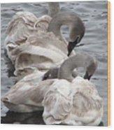 4 Swans Wood Print