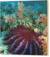 Thailand, Marine Life Wood Print by Dave Fleetham - Printscapes