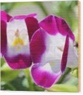 Torenia Named Kauai Magenta Wood Print
