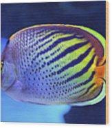 Tropical Fish Wood Print