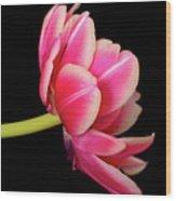 Tulip  Macro Wood Print