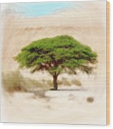 Umbrella Thorn Acacia Acacia Tortilis, Negev Israel Wood Print