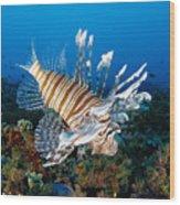 Underwater Close-up Wood Print