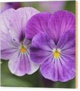 Viola Named Columbine Wood Print