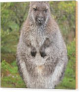 Wallaby Outside By Itself Wood Print