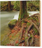 Whatcom Creek Wood Print