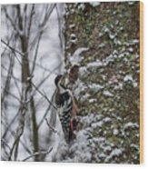 White-backed Woodpecker Wood Print