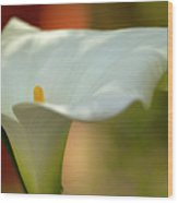White Calla Wood Print