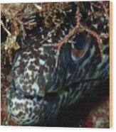White Spotted Eel Wood Print