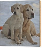 Yellow Labradors Wood Print