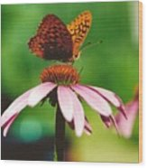 #416 14a Butterfly Fritillary, Coneflower Lunch Break Good Till The Last Drop Wood Print