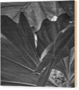 4327- Leaf Black And White Wood Print