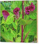 4398- Flowers Wood Print