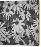 4400- Daisies Black And White Wood Print
