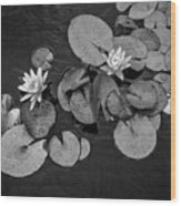 4425- Lily Pad Black And White Wood Print