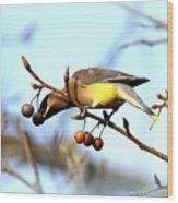 4427 - Cedar Waxwing Wood Print