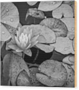 4434- Lily Pads Black And White Wood Print