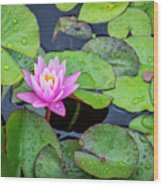 4434- Lily Pads Wood Print