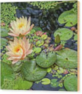 4445- Lily Pads Wood Print