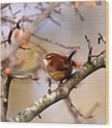 4446 - Carolina Wren Wood Print