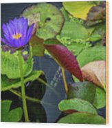 4466- Lily Pads Wood Print