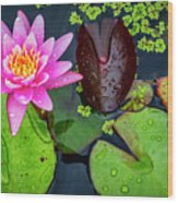 4475- Lily Pads Wood Print