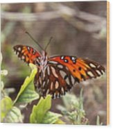 4529 - Butterfly Wood Print