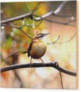 4646 - Carolina Wren Wood Print