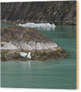 Alaska_00047 Wood Print