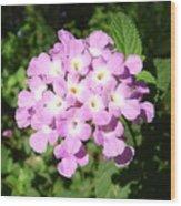 Australia - Pink Flowers Wood Print