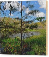 49- Florida Everglades Wood Print