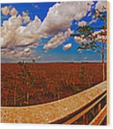 4x1 Everglades Panorama Number Two Wood Print