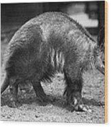 Aardvark Wood Print