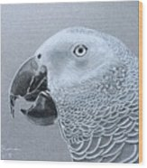 African Grey Parrot Wood Print