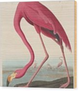 American Flamingo 5 Wood Print