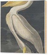American White Pelican 5 Wood Print