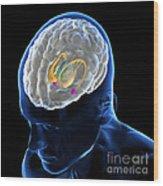 Anatomy Of The Brain Wood Print