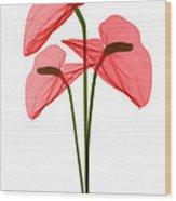 Anthurium Flowers, X-ray Wood Print