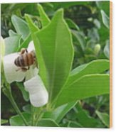 Australia - The Bees Wood Print