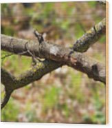 Bare Tree Branches In Early Spring Wood Print