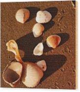 Beach Shells Wood Print