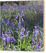 Bluebells Near Effingham In The Surrey Hills England Uk Wood Print