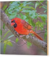 Cardinal Birds Hanging Out On A Tree Wood Print